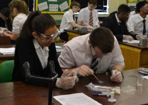 Students working on ELISA