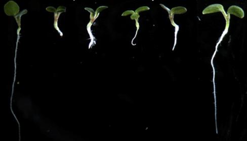 seedlings-ht